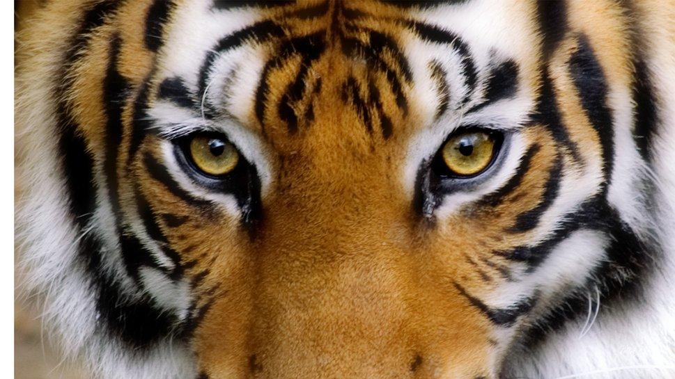 Παγκόσμια ημέρα τίγρης