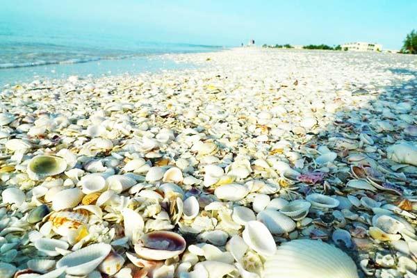 Παραλία κοχυλιών