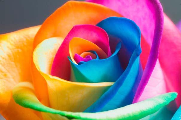 Ουράνιο τόξο τριαντάφυλλα
