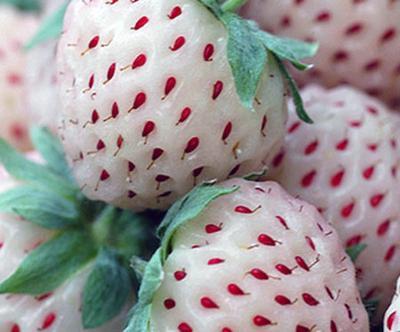 Λευκή φράουλα