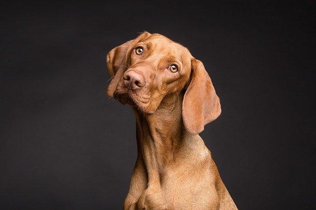Γιατί οι σκύλοι γέρνουν το κεφάλι τους όταν τουςμιλάμε?