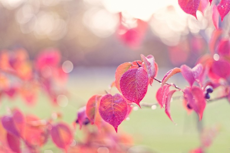 landscapes-beautiful-leaf-beauty-rain-pink-nature-hd-wallpapers-for-desktop-free-download.jpg