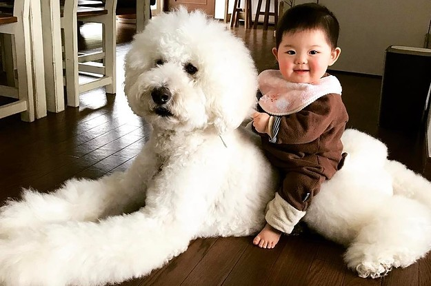 this-baby-and-giant-dogs-friendship-proves-all-yo-2-26887-1501676244-0_dblbig.jpg