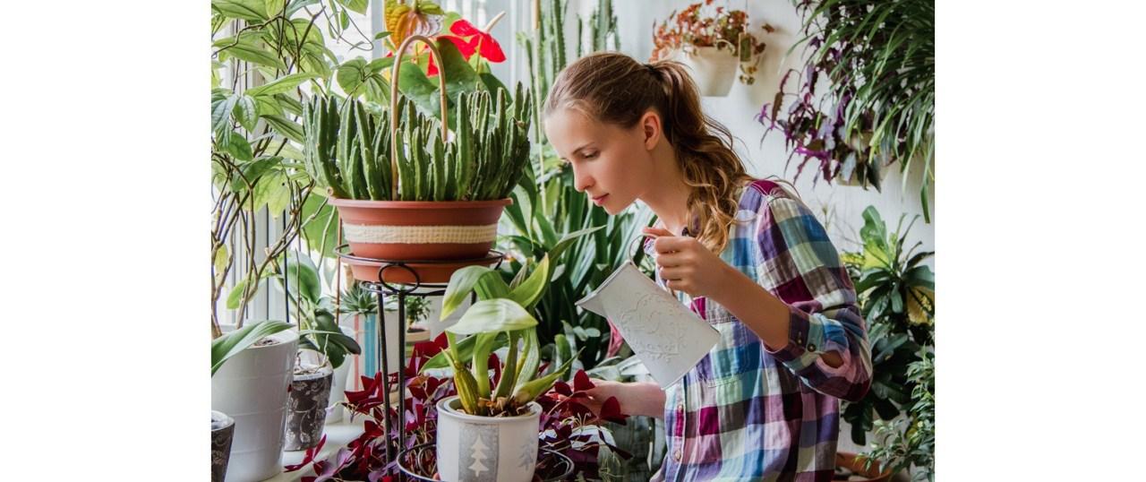 4 τρόποι για να φροντίσεις τα φυτάσου