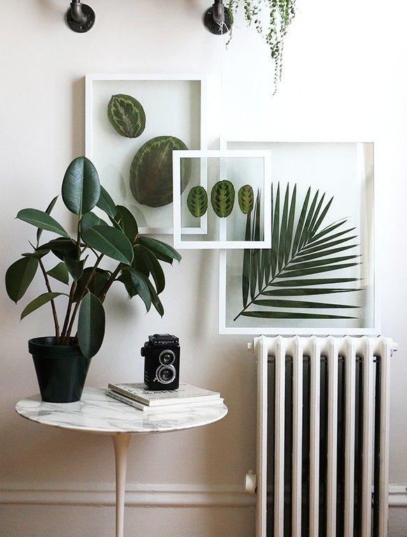 framed-plants-1.jpg