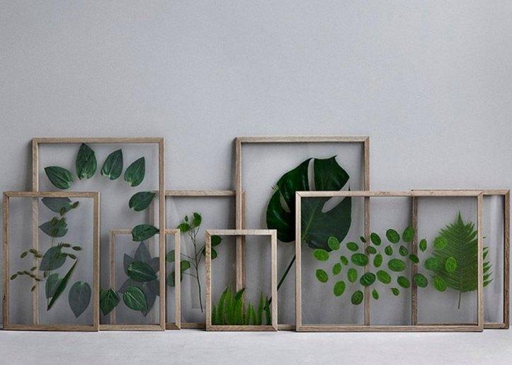 framed-plants-3.jpg