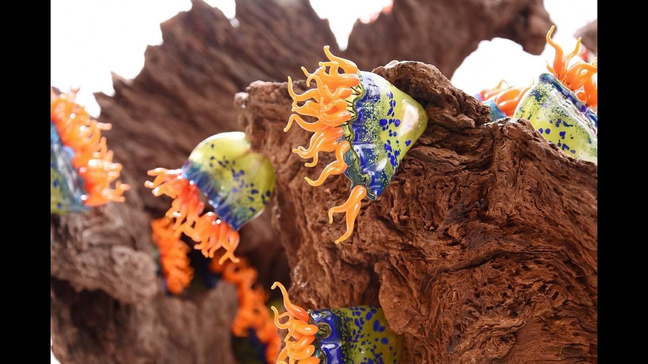 Εύθραυστη ομορφιά: η φύση γίνεται γλυπτά από γυαλί που αποπλανούν τοΠαρίσι