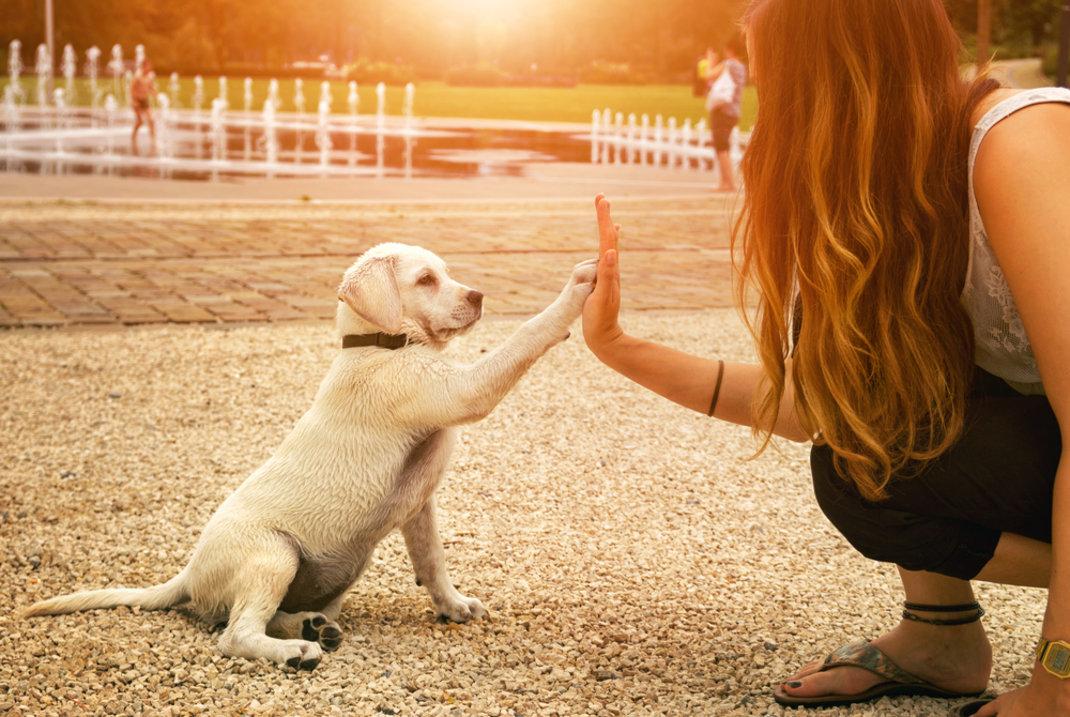 Οι σκύλοι υπακούν περισσότερο τις γυναίκες παρά τους άνδρες -Ο εκπληκτικόςλόγος