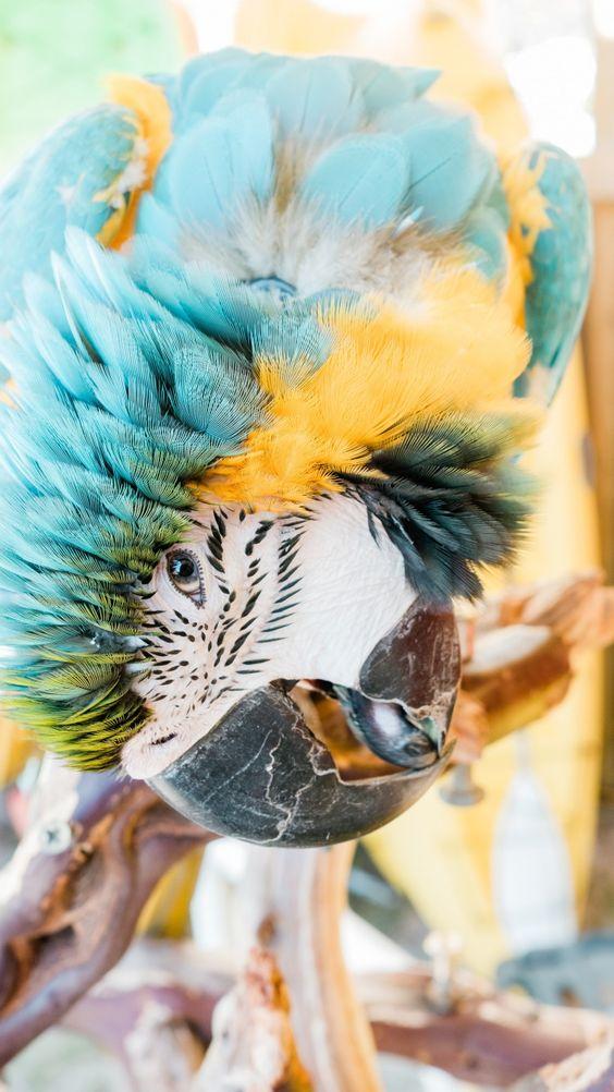 Το ανέκδοτο της ημέρας: Ο παπαγάλος και…γαλοπούλα