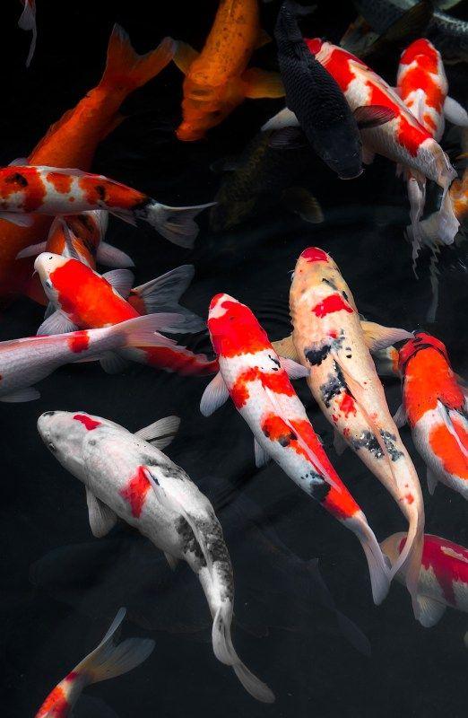 Το ψάρι αυτό το έπαιξε «ψόφιος κοριός» για ναγλιτώσει
