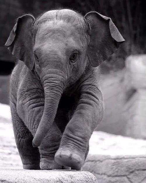 Παγκόσμια Ημέρα τουΕλέφαντα