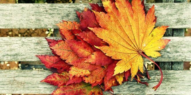 Φθινόπωρο: 5 πράγματα που λατρεύουμε και 5 πουμισούμε!
