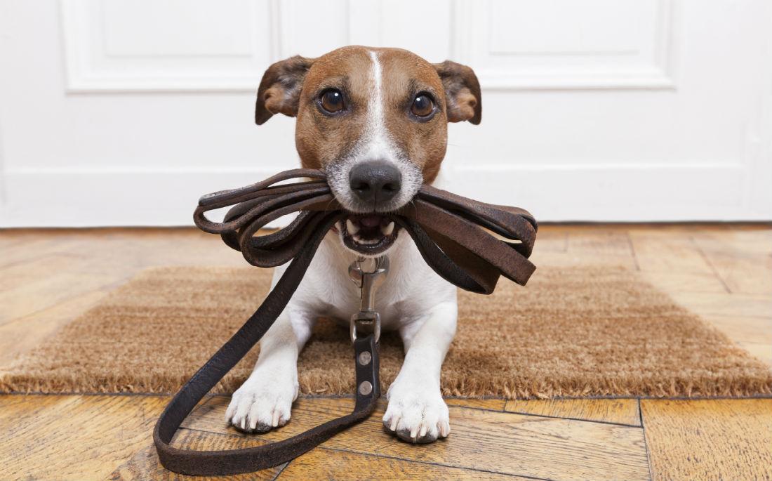 9 σημάδια ότι ο σκύλος σου θέλει επειγόντωςβόλτα