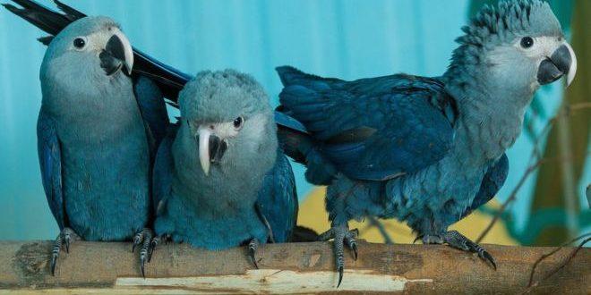 Εξαφανίστηκαν οι μπλε παπαγάλοι τηςΒραζιλίας