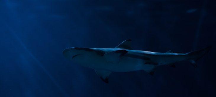Αυτούς τους καρχαρίες δεν θα τους φοβηθείς αν τους δεις μπροστάσου