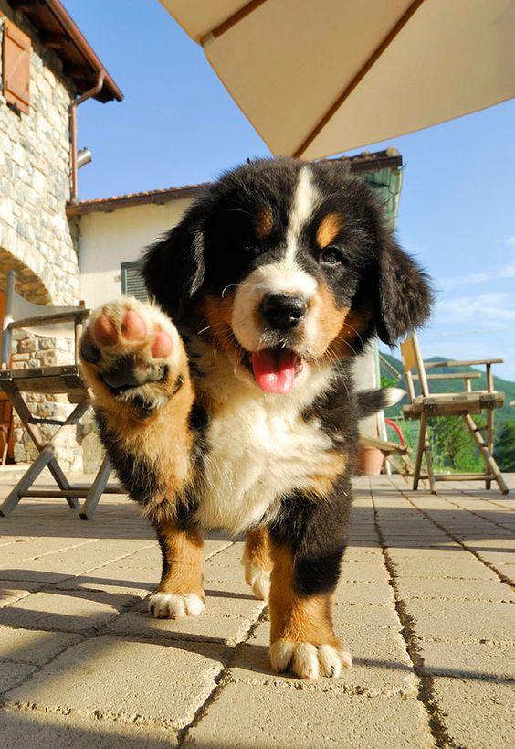 Μήπως ο σκύλος σου γίνεται υπερπροστατευτικός με τα παιχνίδιατου;