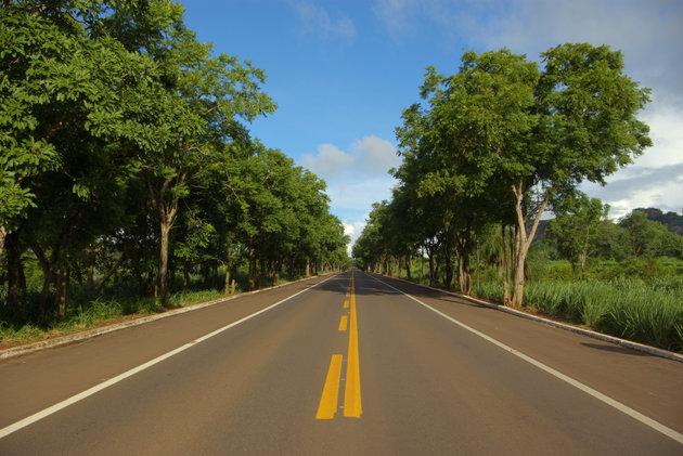 BR-262: Ο δρόμος χωρίς επιστροφή για τα ζώα της ζούγκλας-2.200 άγρια ζώα νεκρά απότροχαία