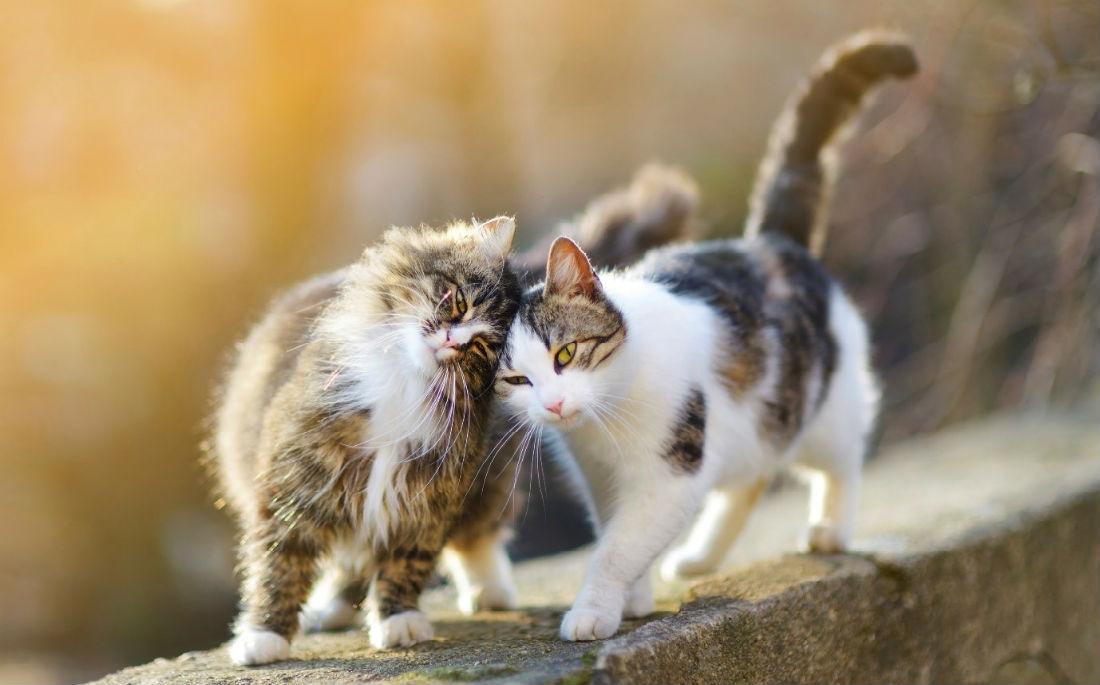 Γιατί σού τρίβεται η γάτασου;
