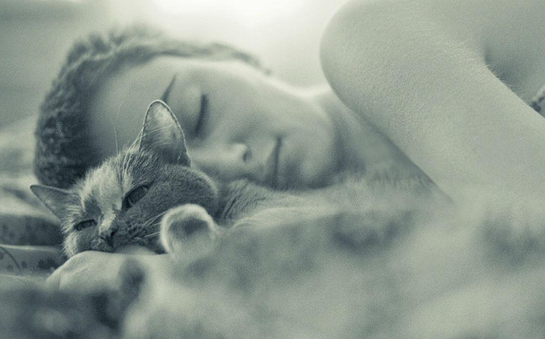 Η γάτα σου σε βλέπει σαν μια ακόμη γάτα, τεραστίωνδιαστάσεων!