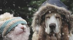 Πώς ξέρετε αν το κατοικίδιό σας κρυώνειπραγματικά;