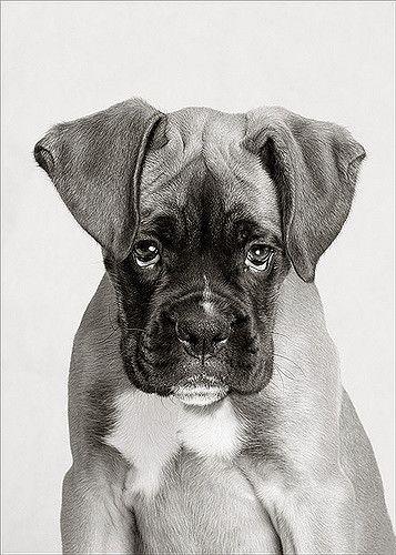 Ο χαρακτήρας του σκύλου αλλάζει με τα χρόνια! Από τιεξαρτάται;