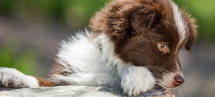 Γιατί ο σκύλος σου δαγκώνει το πόδιτου;