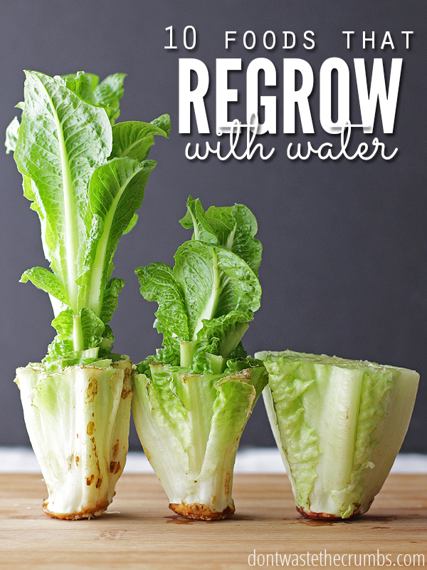 10 WAYS TO REGROW FOOD IN WATER