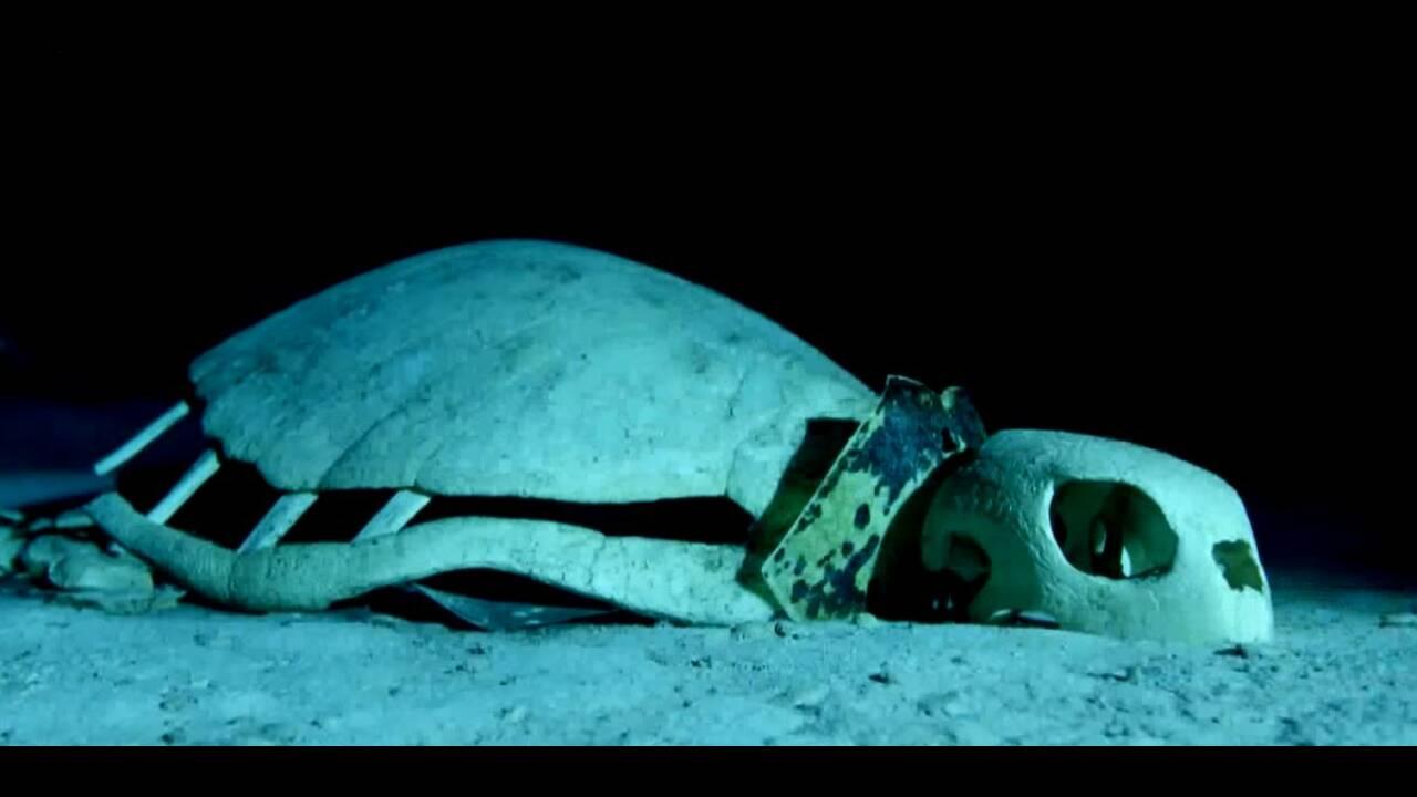 Εντυπωσιακές εικόνες: Υποβρύχιο «νεκροταφείο» για χελώνες στον ΙνδικόΩκεανό
