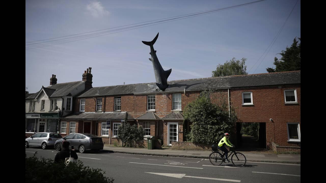 Πώς βρέθηκε ένας καρχαρίας σε μια σκεπή στην Οξφόρδη; Μια ιστορία ανατρεπτικότητας καιεπιμονής