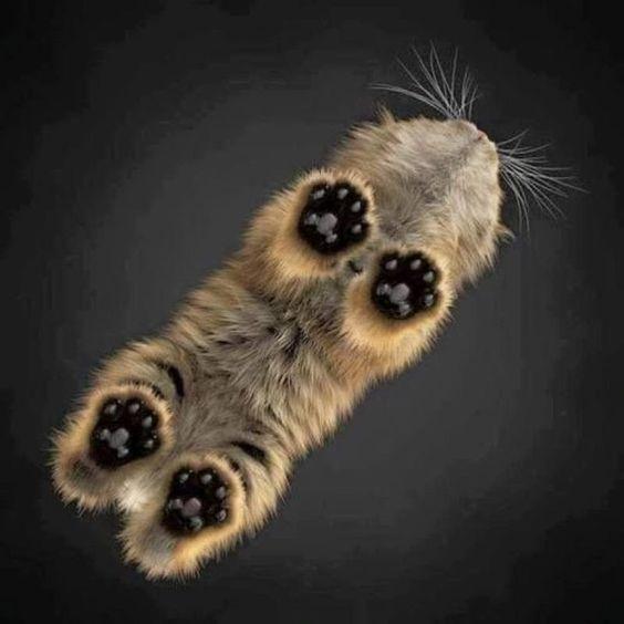 Εταιρεία στην Κίνα κλωνοποιεί γάτες καισκύλους!