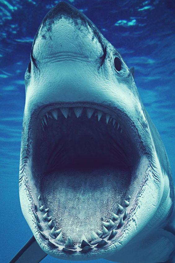 Καρχαρίας επιτέθηκε σε τουρίστες – Ακρωτηριάστηκε ένας28χρονος