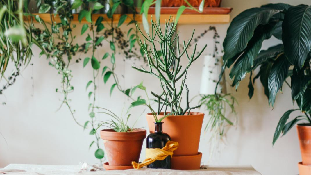 Τι πρέπει να κάνεις στις πήλινες γλάστρες σου πριν βάλεις νέα φυτά -Το έξυπνο τρικ που δενήξερες