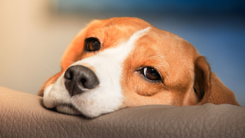 Πέντε λάθος συμπεριφορές που πληγώνουν τονσκύλο