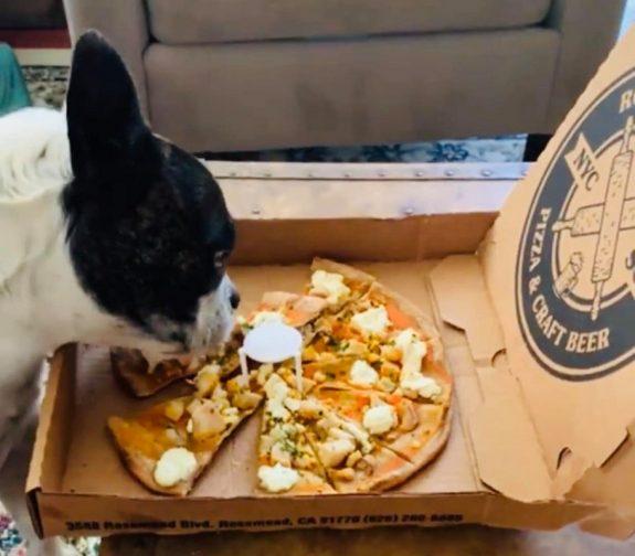 Εστιατόριο φτιάχνει πίτσα ειδικά γιασκύλους