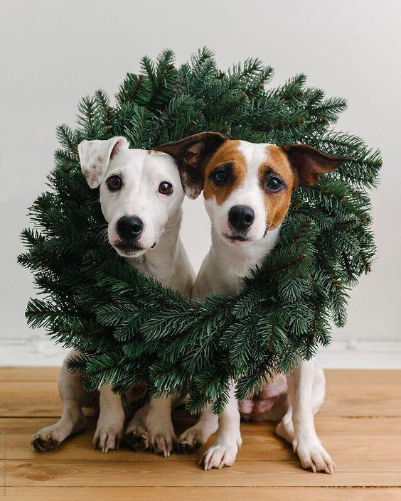 Η χριστουγεννιάτικη διακόσμηση βλάπτει τον σκύλοσου