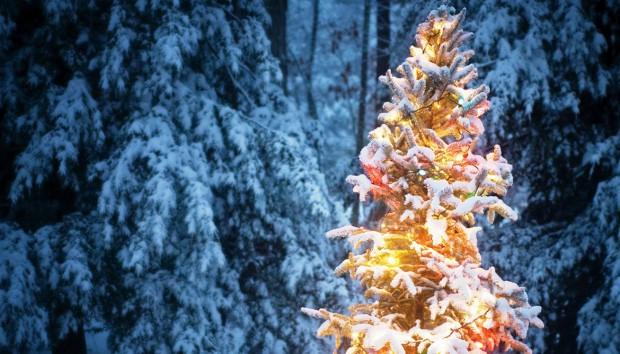4 Πράγματα που δεν Γνωρίζετε για τα Χριστουγεννιάτικα Δέντρα