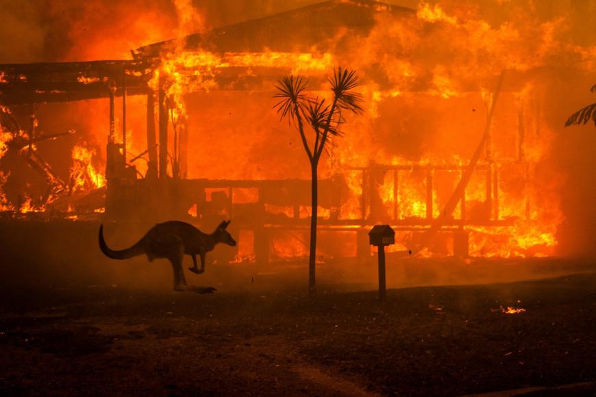 Αυστραλία: Η εικόνα με το απανθρακωμένο καγκουρό που «λύγισε» τοίντερνετ