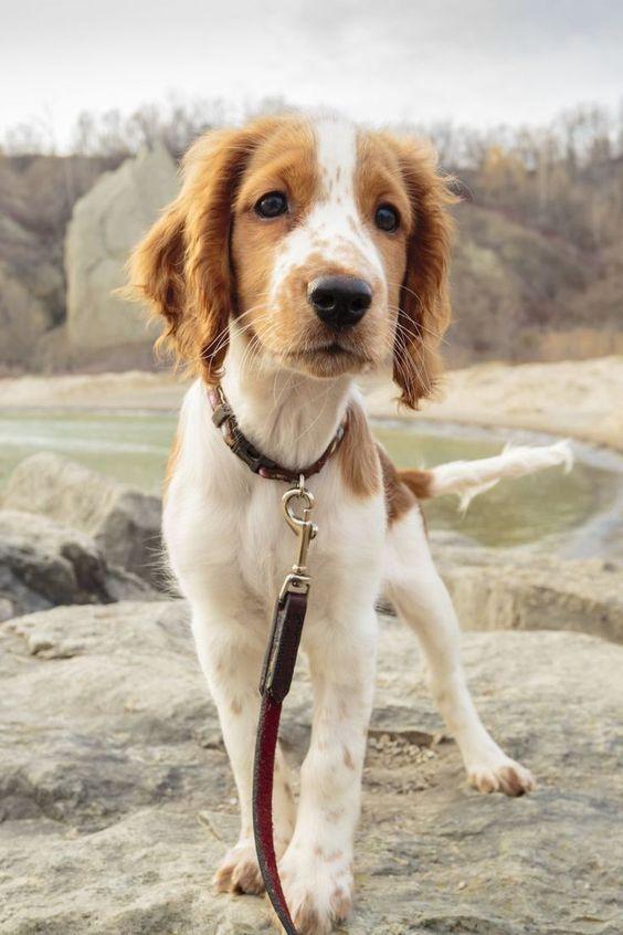 H Spotify εγκαινίασε playlists για σκύλους όταν λείπει το αφεντικότους