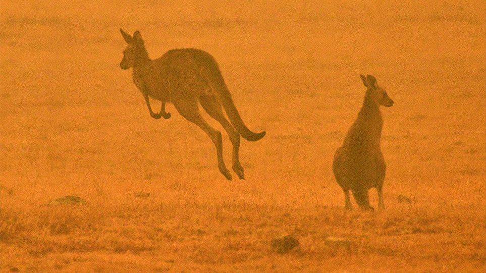 Αυστραλία: Ανυπολόγιστη οικολογική καταστροφή από τις πυρκαγιές – Σκοτώνουν τα ζώα τους για να μηνυποφέρουν!