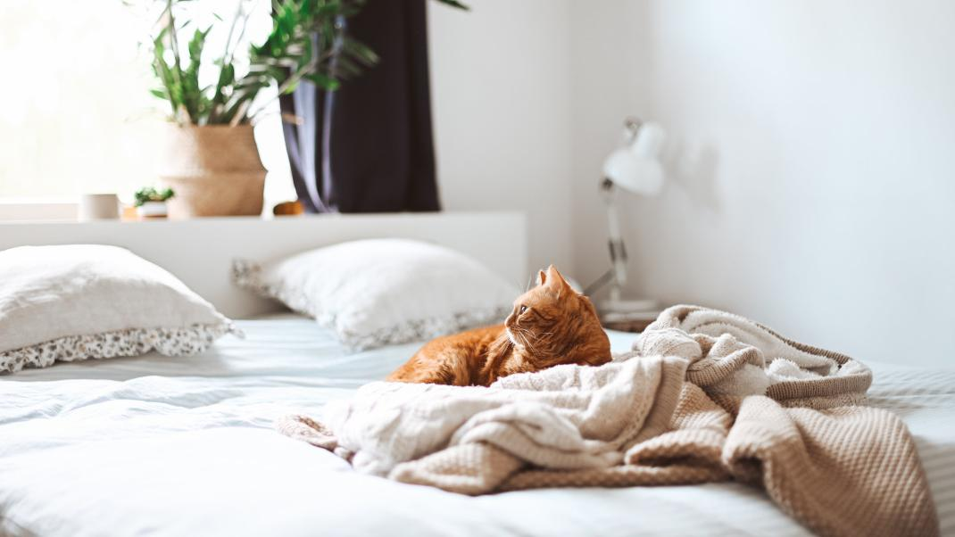 Τα αντικείμενα που δημιουργούν ακαταστασία στο υπνοδωμάτιο και πρέπει άμεσα νααπομακρύνεις