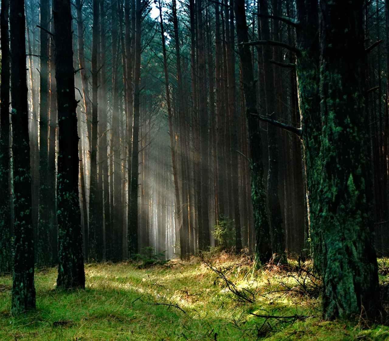 Πατέρας πήρε τα τρία παιδιά του και κρύφτηκαν στο δάσος για να σωθούν από τον…κορονοϊό