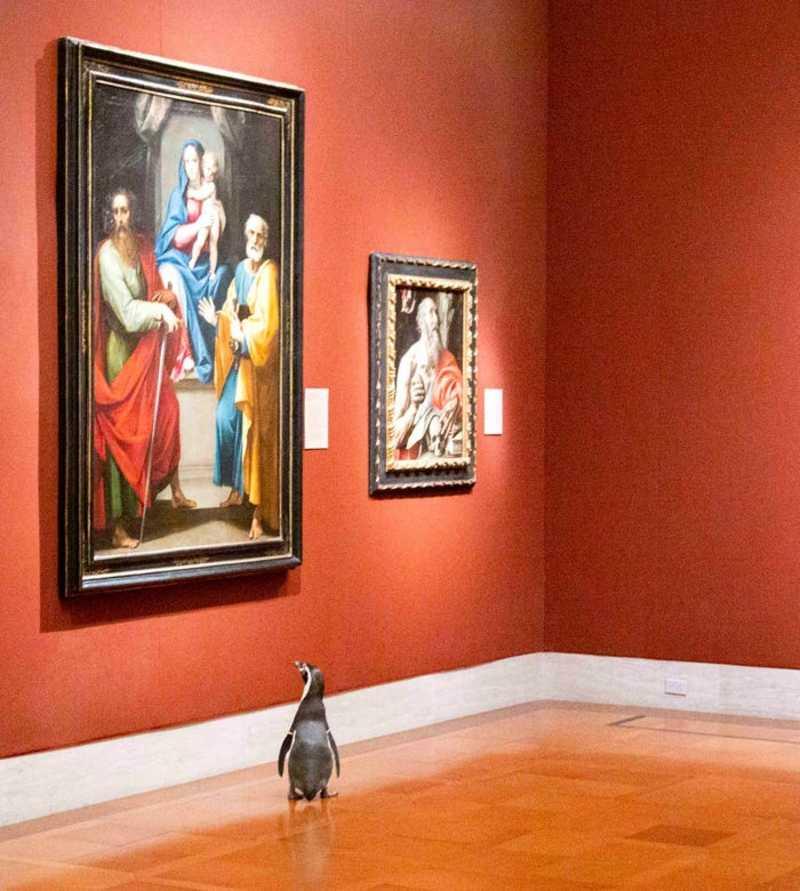 Φιλότεχνοι πιγκουίνοι επισκέφθηκαν μουσείο τέχνης και πραγματικά απόλαυσαν έργα διάσημωνζωγράφων