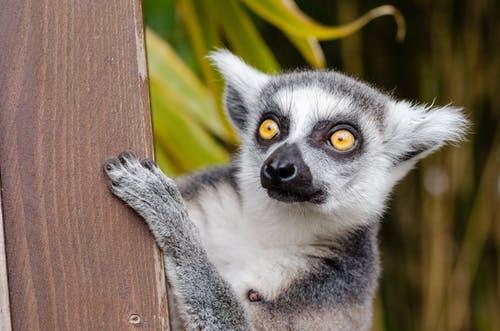 Καταγραφή του πρώτου θανάτου στη Μαδαγασκάρη λόγωκορωνοϊού