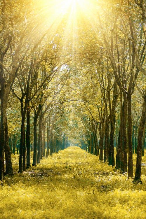 Ο Καρλ Γιουνγκ είπε ότι έχουμε 4 στάδια στη ζωή μας. Σε ποιο στάδιο ανήκετεεσείς;