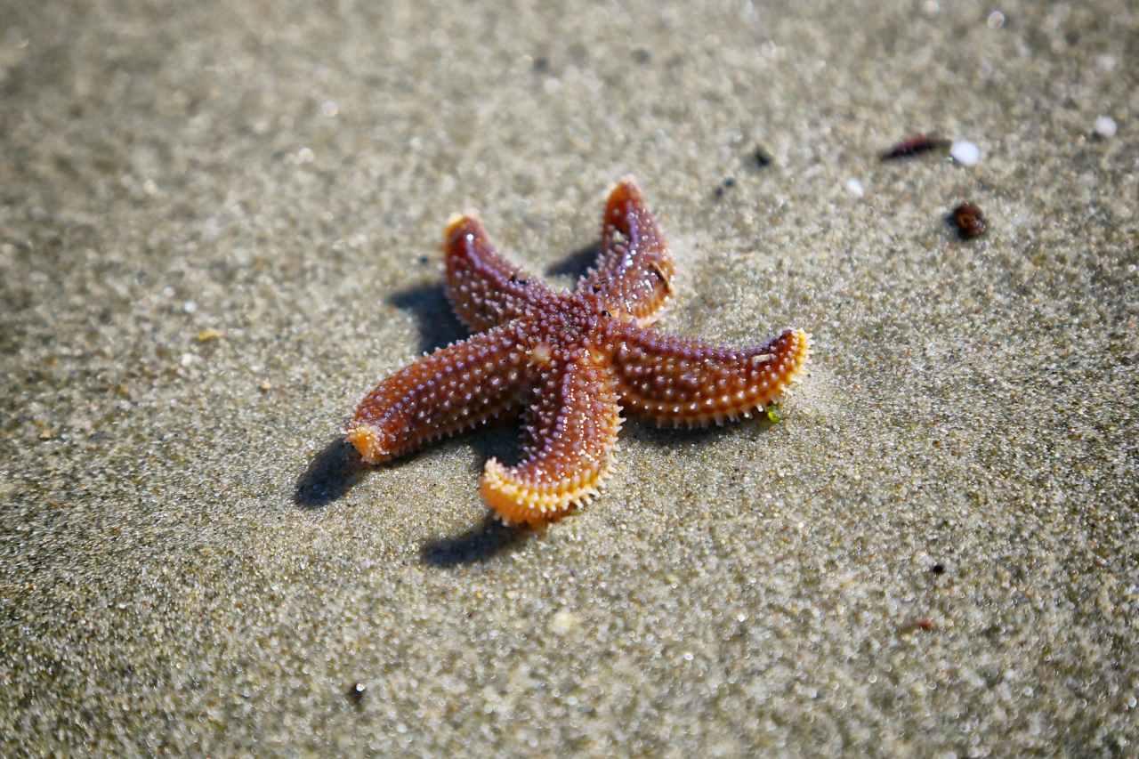 Παραλία άδειασε από κόσμο λόγω κορονοϊού! Αυτό που ακολούθησε δεν είχε καταγραφεί ποτέ σταχρονικά!