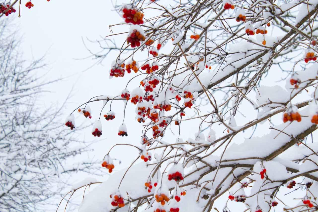 Σάκης Αρναούτογλου: Πιθανόν να χιονίσει Τρίτη καιΤετάρτη
