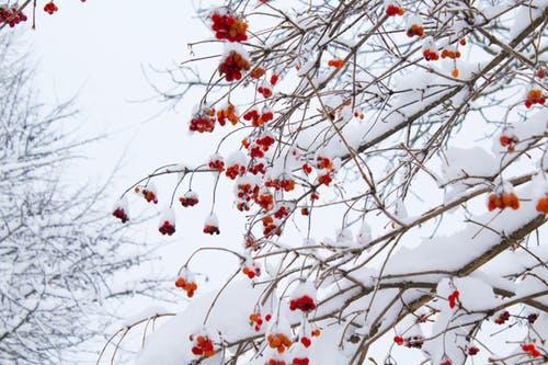 Ο καιρός «τρελάθηκε»: Χιόνισε στηΦλώρινα