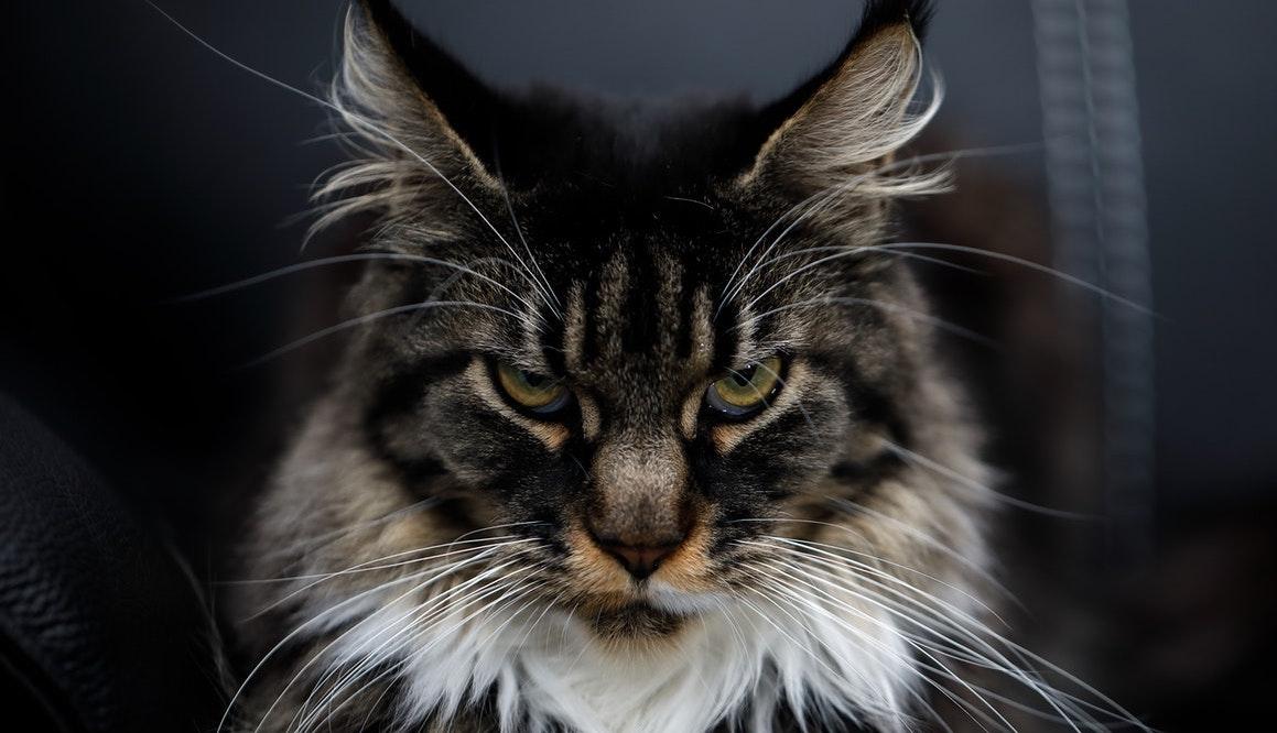 Γιατί οι γάτες είναι πνευματικοίπροστάτες