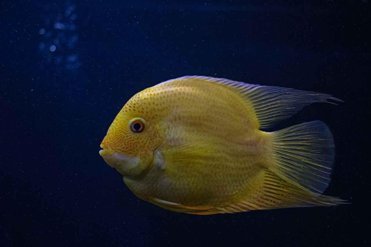 Είδε ψάρι στον ύπνο του, αλλά δεν πήρε λαχτάρα…κέρδισε στοΤΖΟΚΕΡ