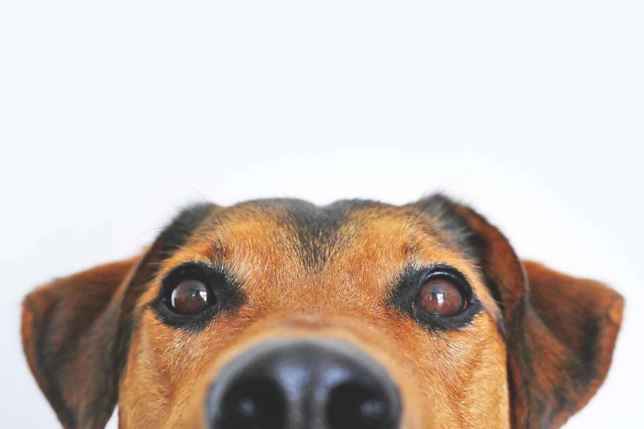 Ο σκύλος δεν κάνει να τρώει πατάτα – Και άλλοι 5 μύθοι για τη διατροφήτου
